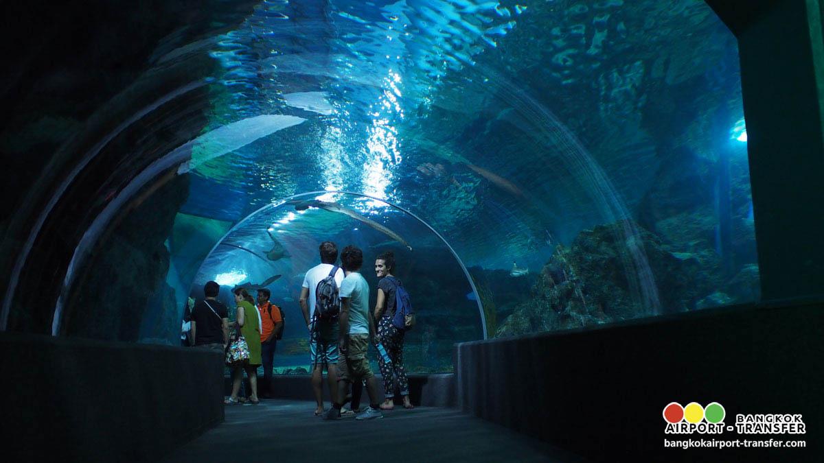Bangkok Airport Transfer Sea Life Ocean World Madame Thailand Et Ticket Aquarium Only Adult Picture